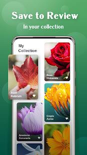 Lentille végétale - Identification des plantes et des fleurs