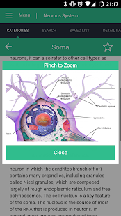 Nervous System Reference Guide