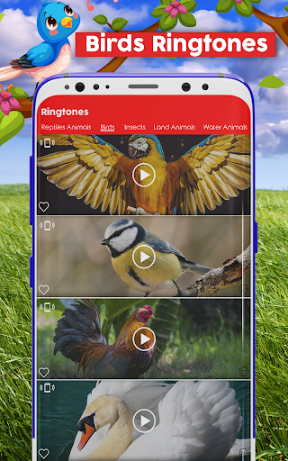 Animals and Birds Ring Tones