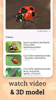 Insect identifier app - identity insects