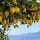 Limon Turlari para PC Windows