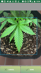 GrowCush - Cannabis deficiency detection .APK Preview 2