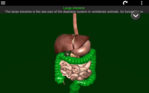 Internal Organs in 3D (Anatomy) 2.5 Screenshots 13