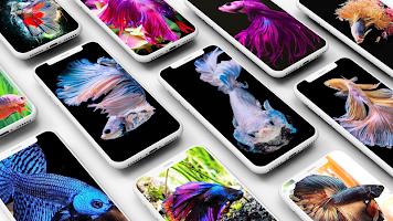 Betta Fish Wallpapers