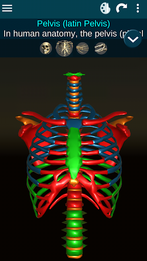 Osseous System in 3D (Anatomy) 2.0.3 Screenshots 2