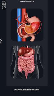 My Stomach Anatomy