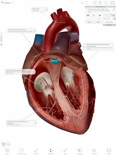Human Anatomy Atlas 2021:u00a0Complete 3D Human Body 2021.2.27 Screenshots 18