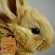 beautiful rabbit wallpaper - fluffy rabbit APK