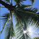carta da parati spiaggia palma - hawaii per PC Windows