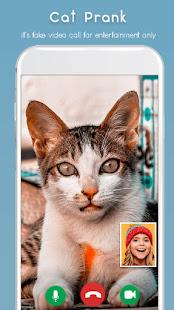 Cat Video Calling