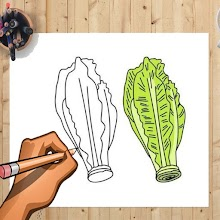 How to Draw Lettuce And Other Vegetables Easily APK