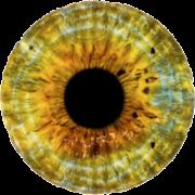Ishihara Color Blindness Test