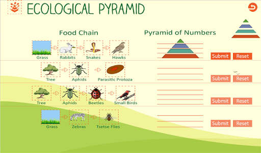 Ecological Pyramid-Food Chain For PC Windows (7, 8, 10, 10X) & Mac Computer Image Number- 20