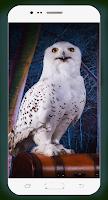 Owl Wallpaper HD