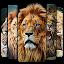 Lion Wallpaper 🦁