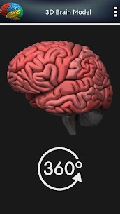 3D Human Brain + For Pc (Free Download – Windows 10/8/7 And Mac) 3