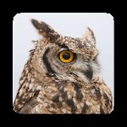 Owl Bird Sound Collections ~ Sclip.app
