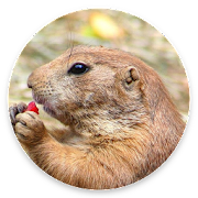 DiggieDog: A Gopher Client for Android