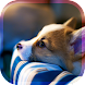 犬の癒し育成ゲーム3D 無料でペット育成