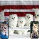 Cat Wallpaper App per PC Windows