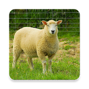 Top 31 Music & Audio Apps Like Domestic Sheep Sound Collections ~ Sclip.app - Best Alternatives