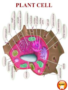 ANATOMY 3D – Human, Animal, Plant, Insect Anatomy For Android 5