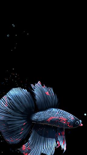 Betta Fish Live Wallpaper FREE 1.4 Screenshots 22