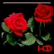 Red Rose APUS Live Wallpaper