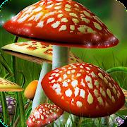 Mushroom Wallpaper Best HD