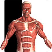 Visual Anatomy 2  Icon