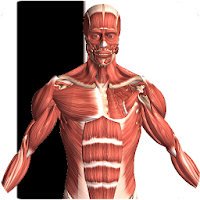 Visual Anatomy 2