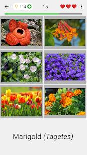 Flowers - Botanical Quiz about Beautiful Plants