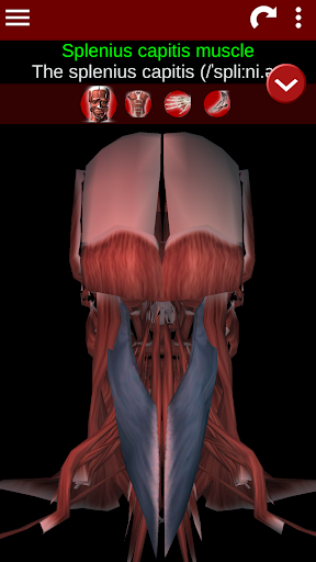 Muscular System 3D (anatomy) 2.0.8 Screenshots 6