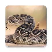 Top 30 Music & Audio Apps Like Rattlesnake Sound Collections ~ Sclip.app - Best Alternatives