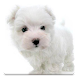 Dog Wallpapers!