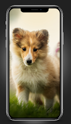 puppies wallpapers FHD 4K 2021 .APK Preview 1