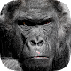 Real Gorilla vs Zombies - City Download on Windows