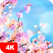 Spring Wallpapers 4K