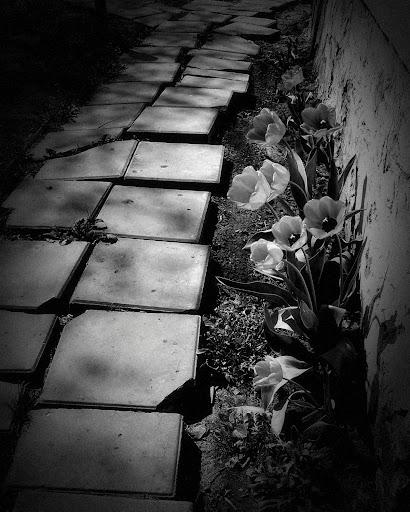 Dramatic Black & White ss3