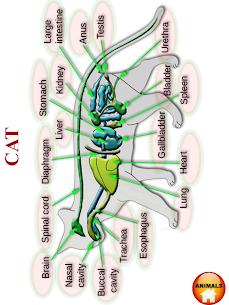 ANATOMY 3D – Human, Animal, Plant, Insect Anatomy For Android 3