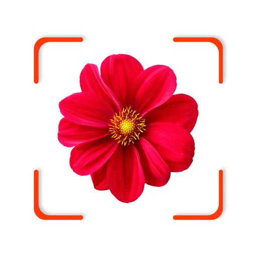 FindPlant - Plant identification