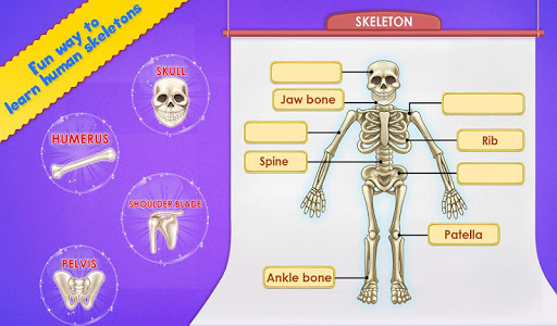 Human Body Parts - Preschool Kids Learning  screenshots 5