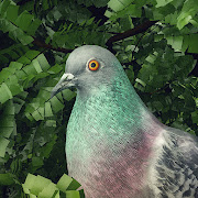 Pigeon: A Love Story 4+