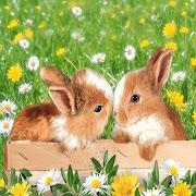 Little bunnies-pictures
