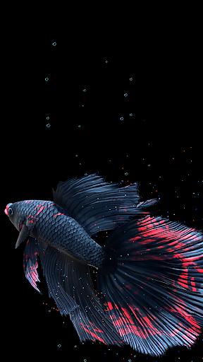 Betta Fish Live Wallpaper FREE 1.4 Screenshots 24