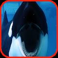 Killer Whale Wallpaper HD APK