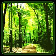 Forest Wallpaper