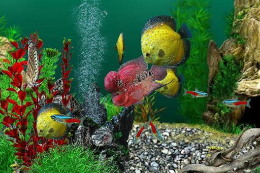 AquaLife 3D filehippodl screenshot 4