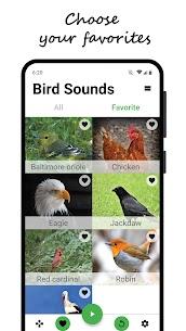 Bird sounds 4