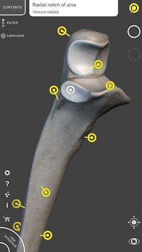 Skeleton   3D Anatomy 2.5.3 Screenshots 5